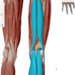 下肢連結1